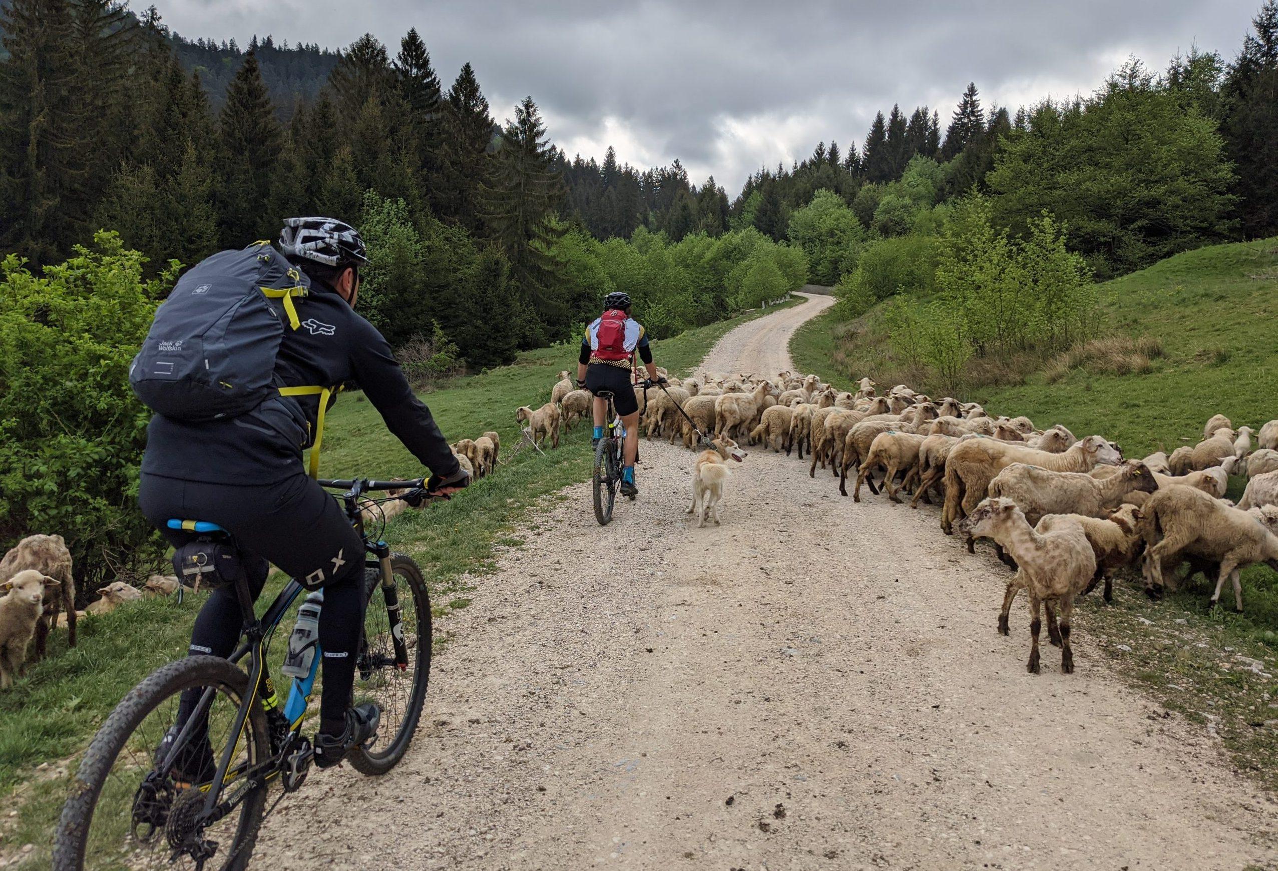 Ture de Mountain-Bike în Ținutul Mocanilor